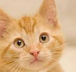 How an orange kitten can help your love life (really!)