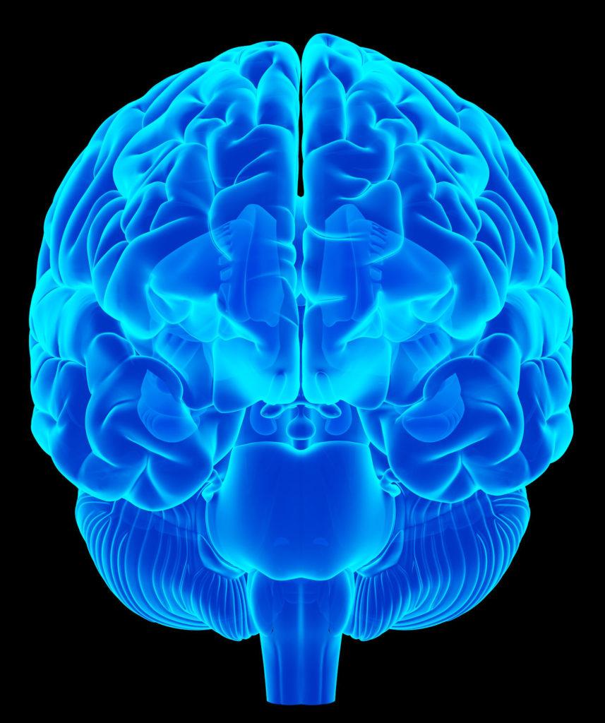 Transparent Brain plasticity
